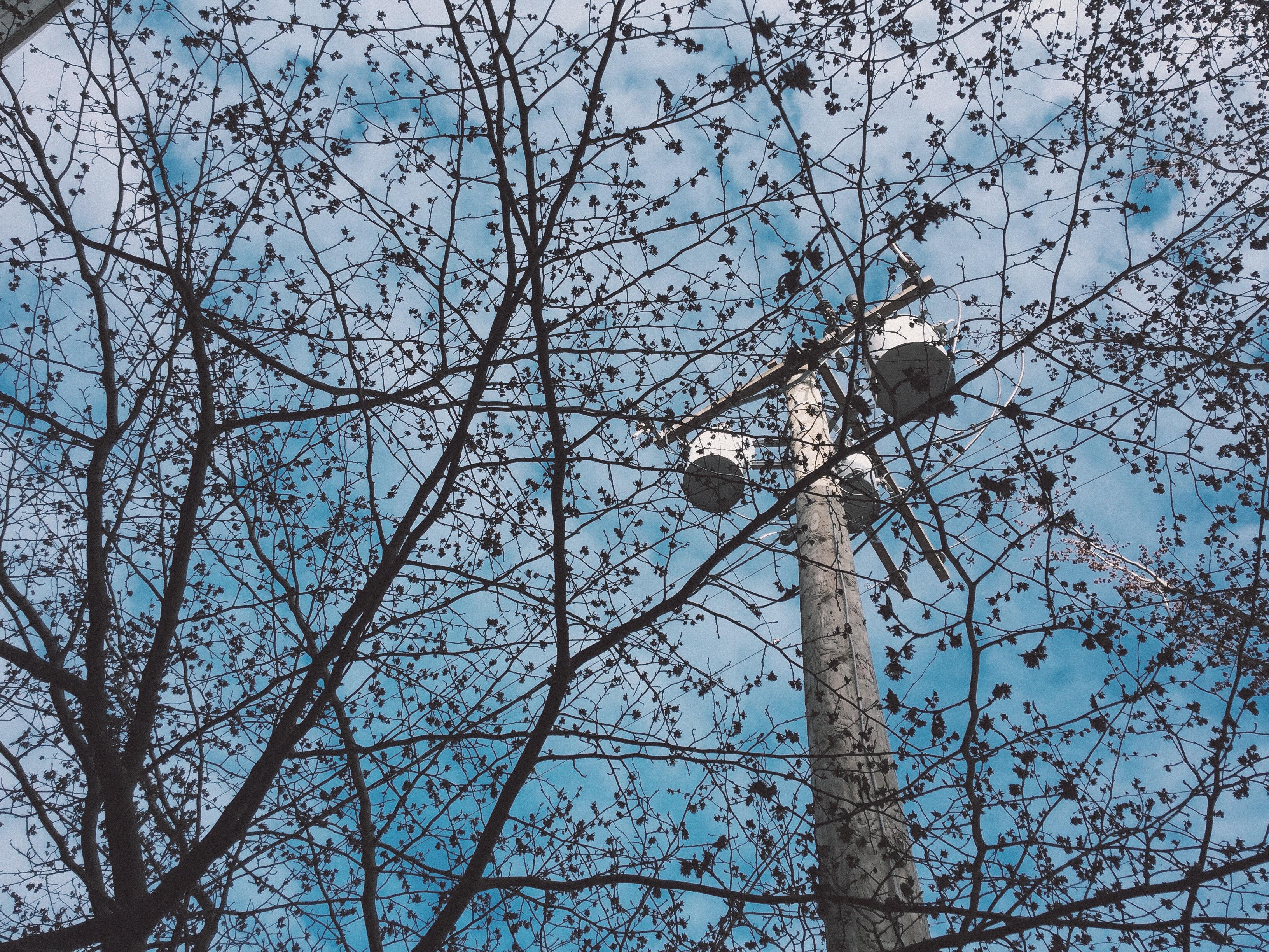 Деревянные столбы с трансформаторами